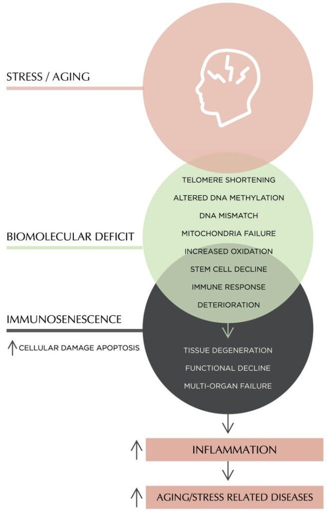 Biomolecular Deficit and Immunosenescence